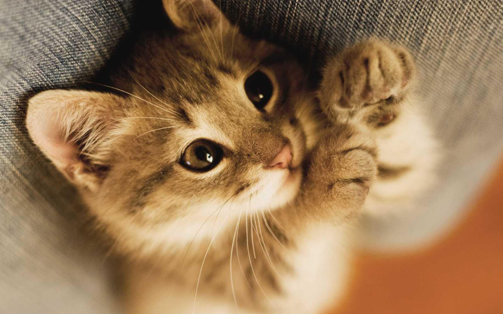 おいしそうな脚の女子高生233脚目 [転載禁止]©bbspink.com->画像>555枚