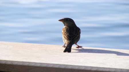 Çekim HD Kuş Resimleri, ya