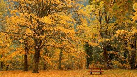 Doğa Resimleri - Duvar Kağıtları 15