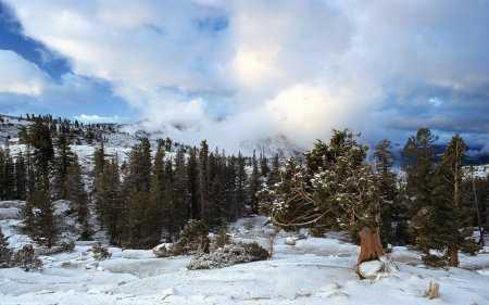 Kar Manzaraları - Duvar Kağıtları