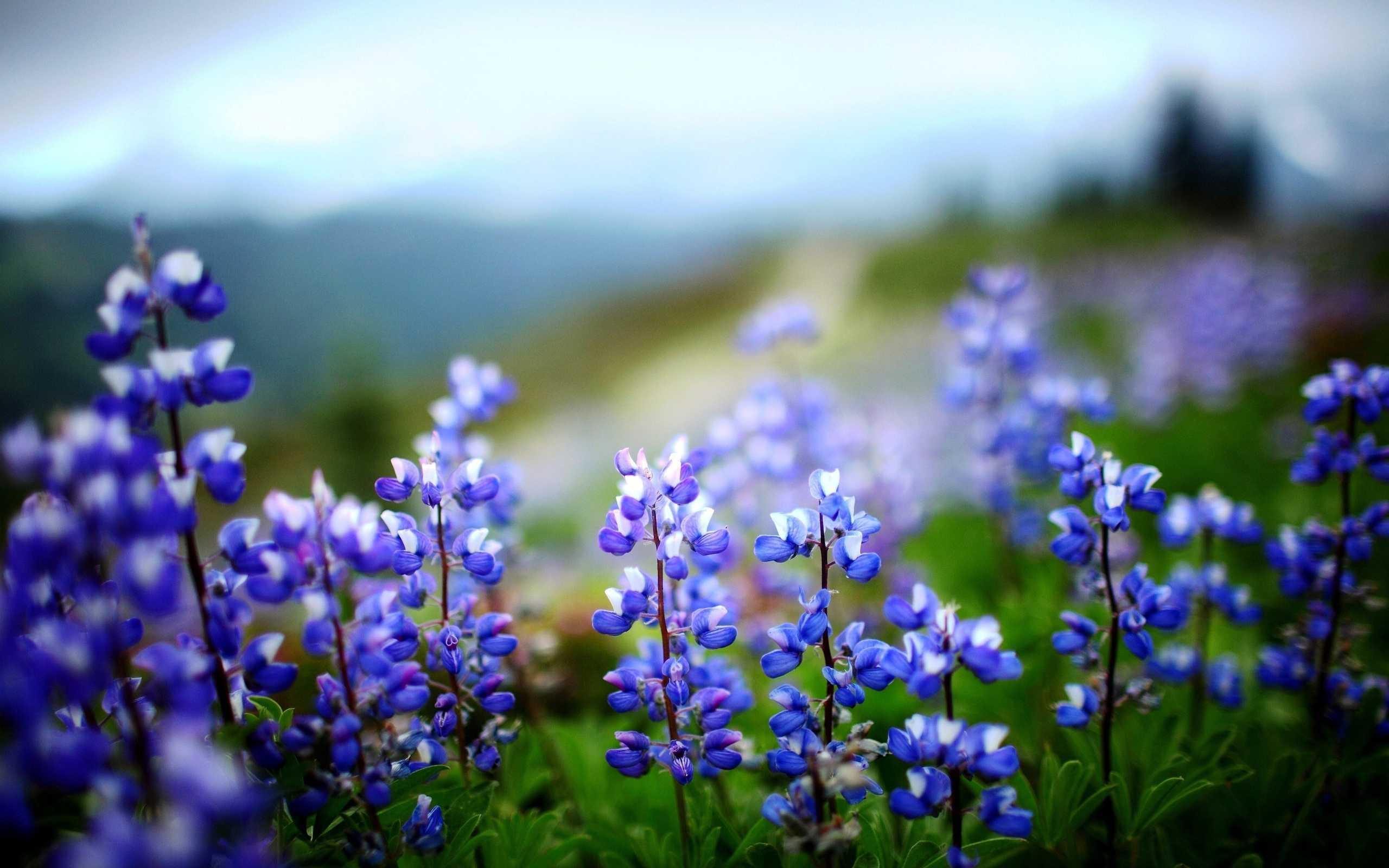 Фото и картинки разноцветных цветов гортензии