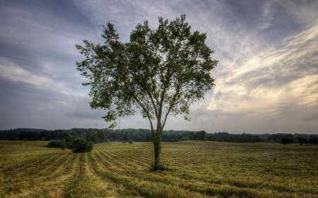 HD Doğa Resimleri - Masaüstü Duvar Kağıtları
