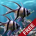 The real aquarium (Canlı Akvaryum Hareketli Duvar Kağıdı)