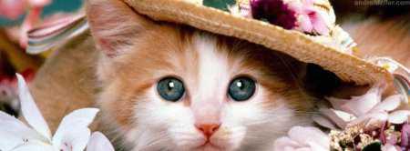 Facebook Kapak Fotoğrafları (Sevimli Kediler)