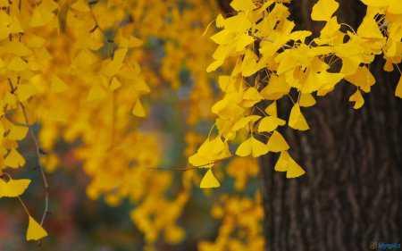 HD Masaüstü Doğa Resimleri Duvar Kağıtları