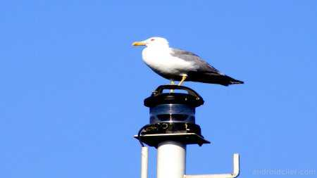 Yakın Çekim HD Kuş Resimleri (Kendi Çektiğim Resimler)
