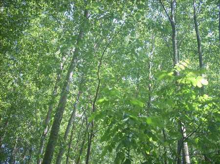 HD Masaüstü İlginç Doğa - Orman - Ağaç Resimleri