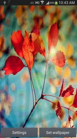 Kırmızı Yaprak Duvar Kağıdı