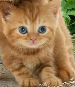 Yavru Kedi Zil ve Mesaj Sesleri Mp3