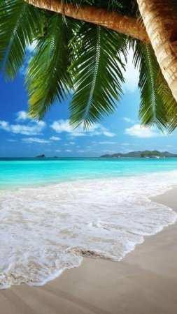 Plaj Canlı Duvar Kağıdı Android